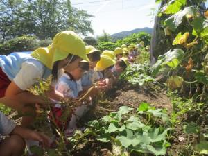 ジャガイモ掘りj